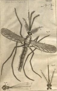 Mosquito-image1