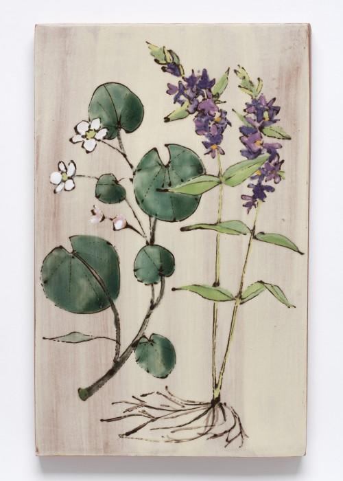 Floating Marsh-marigold and Purple Loosestrife