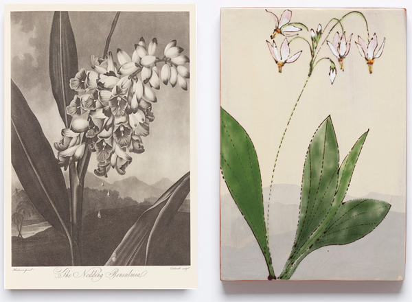 Botanical illustration (left) provided inspiration Hagens' colorful finished tile (right).