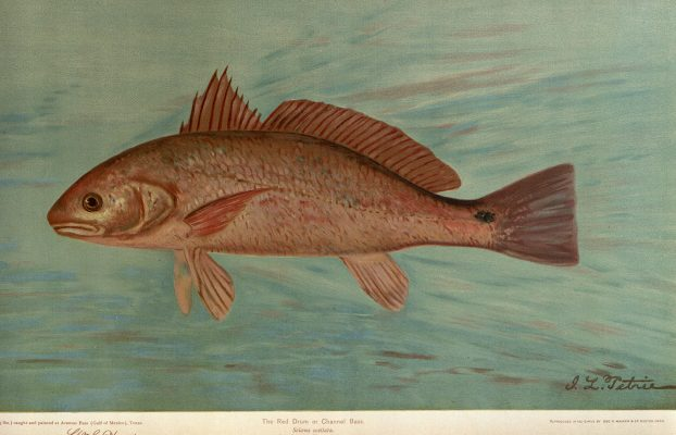 Harris, William Charles. 1898. The Fishes of North America That Are Captured on Hook and Line. With Eighty Colored Plates Made from Oil Portraits of Living Fishes before Their Color Tints Had Faded /By William C. Harris … Volume I. New York: Fishes of North America publishing co.