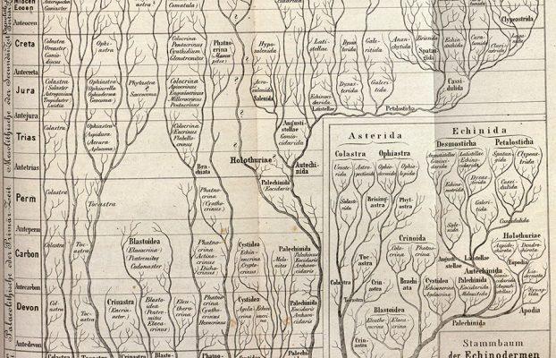 Haeckel, Ernst. 1866. Generelle Morphologie Der Organismen.: Allgemeine Grundzüge Der Organischen Formen-Wissenschaft, Mechanisch Begründet Durch Die von Charles Darwin Reformirte Descendenz-Theorie. Berlin]: [G. Reimer].