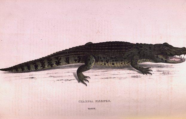 Wagler, Johann Georg. 1828. Descriptiones et Icones Amphibiorum. Monachii: Sumtibus J.G. Cottae.