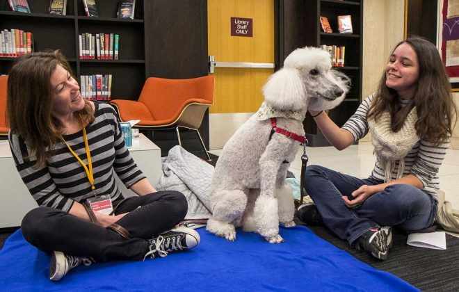 A student (right) enjoys the company of a dog at a PAWS event in Wilson Library.