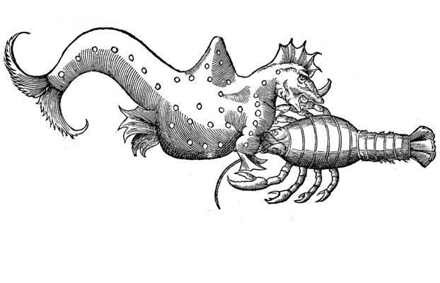 Image used to create pumpkin carving stencil. From Ulisse Aldrovandi, De piscibus libri v. et de cetis lib. unus, Bononiae: Apud Bellagambam, 1613.