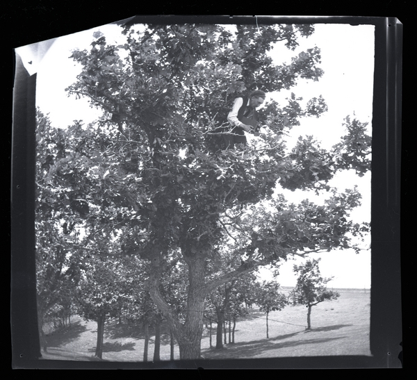 Thomas Sadler Roberts taking a photograph of a Chipping Sparrow's nest in an oak tree with reflex camera, 1900. Roberts was museum director from 1915-1946.