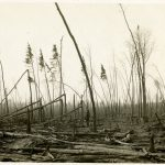 Destroyed woods south of Automba, Minnesota, 1918. Photographer: T.J. Horton.