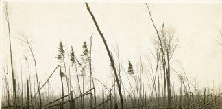 Destroyed woods south of Automba, Minnesota, 1918. Photographer: T.J. Horton.