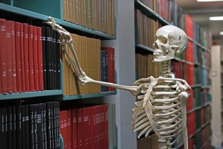 Female skeleton model at the Bio-Medical Library.