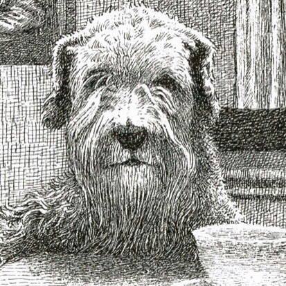 An illustration of a dog from the Children's Literature Research Collections.