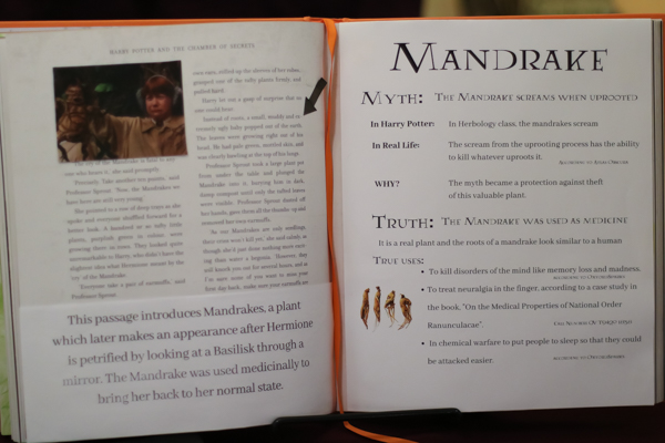 Passage on Mandrakes from Harry Potter book.