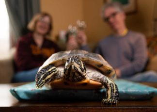 Leonard the turtle with Jan and Carl