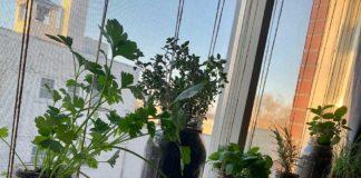 Annie's House Plants in Mason jars.