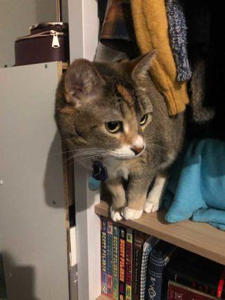 Jamaya's cat, Bonnie