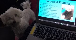 small fluffy white dog peering over a laptop computer