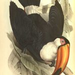 Lear-Toco-Toucan-1834-high-res