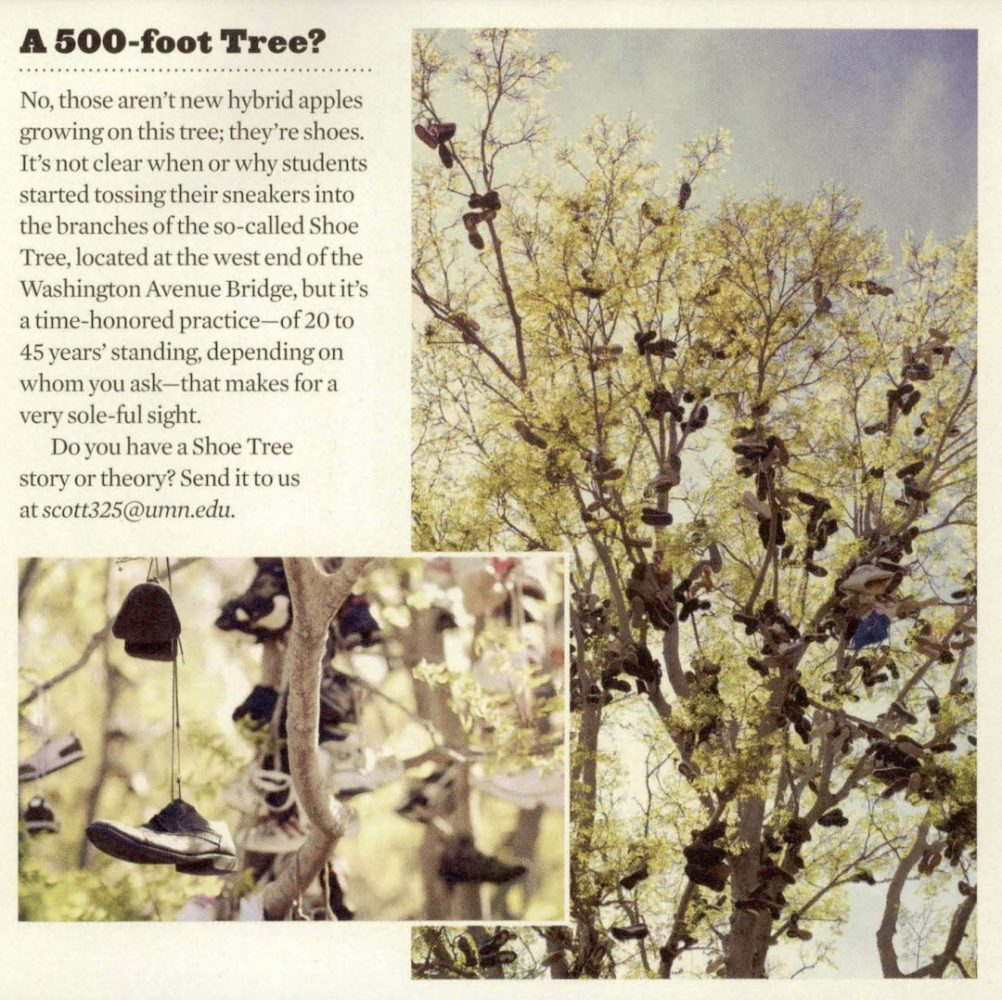 """Article from the Summer 2012 alumni magazine titled """"A 500-foot tree?"""""""
