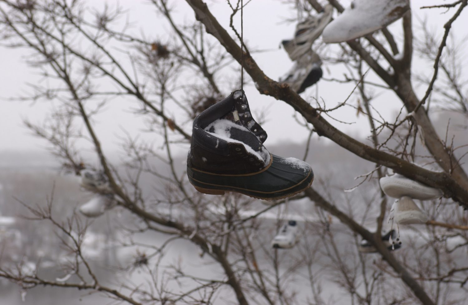 A single winter boot covered in snow hanging from an unseen branch. The Mississippi River is in the background.