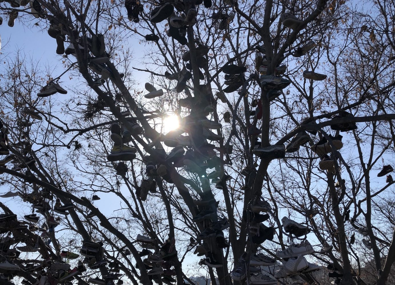 Silhouette of tree branches filled with shoes with the sun shining through the branches.