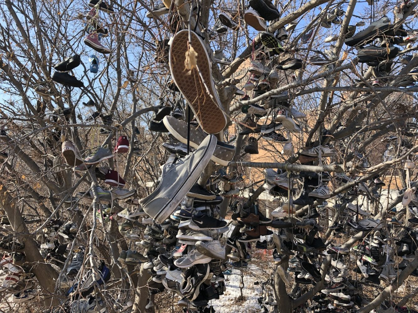 Hundreds of shoes hang from the branches of a tree.