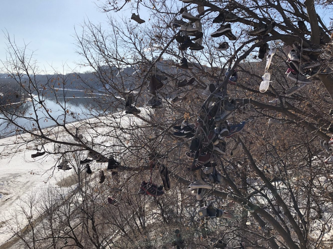 Dozens of shoes hang from branches with the Mississippi River in the background.