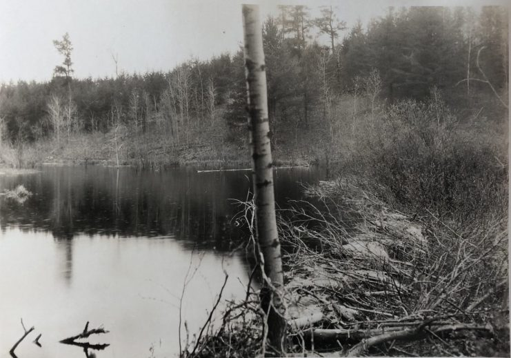 Pond surrounded forest with a beaver dam to the right-hand side.